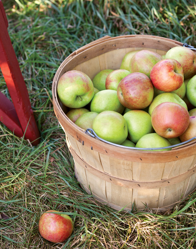 Autumn, especially the months of September and October, is the prime season for apples, and an adventure to sample different varieties can provide a welcome change of pace.