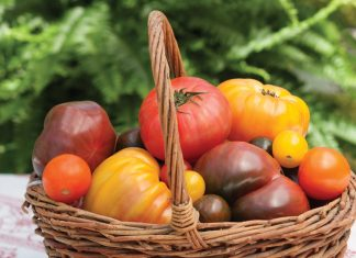 Heirloom Tomatoes Victoria magazine