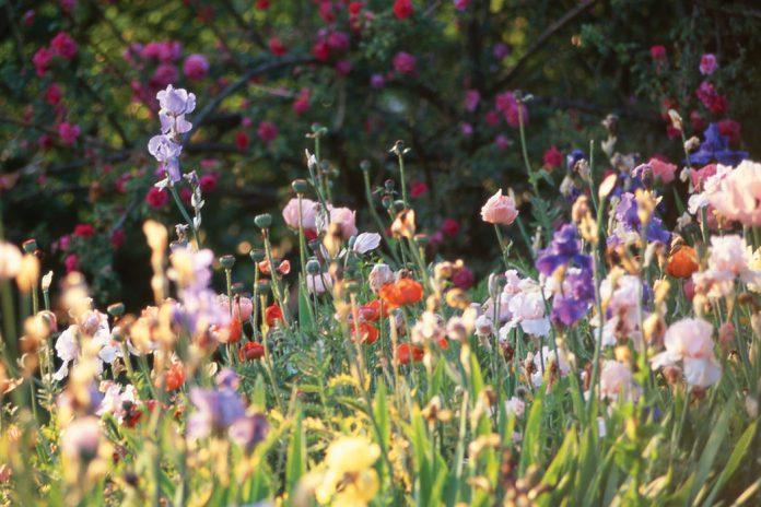 Gardens of Bliss