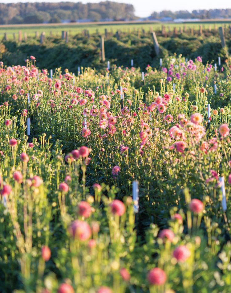 Floret Flower Farm Gleanings From The Garden Victoria