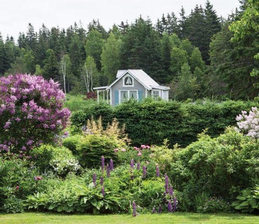 Carolyn Aiken: Where Love Grows
