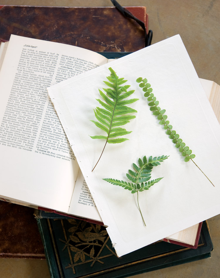 Falling in Love with Ferns