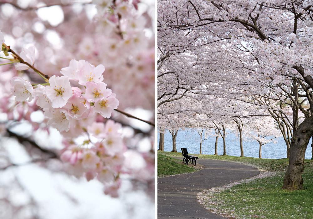 Springtime Destinations