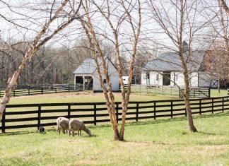 Shepherding a Dream