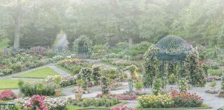 A Flowers & Gardens 2020 Preview
