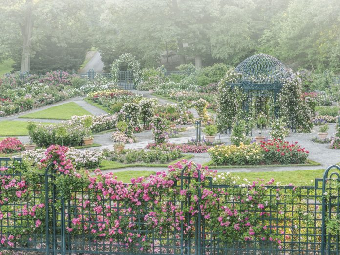 A Flowers & Gardens 2020 Preview