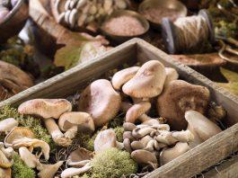 Mushroom Gourmet